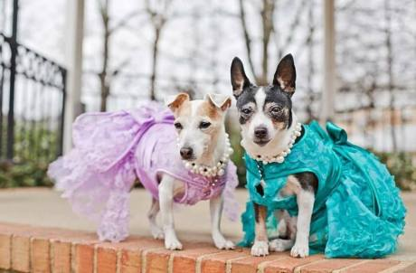 Top Dogs Pet Boutique Roswell GA models