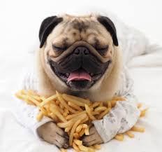 pug fries