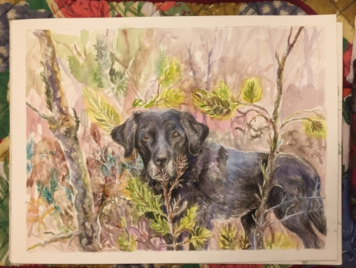 Watercolor of Piki in progress. 9 x 12 inches. December 2019-January 2020